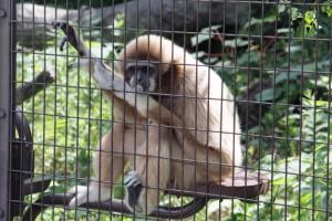 遠足 金沢自然動物園・・・
